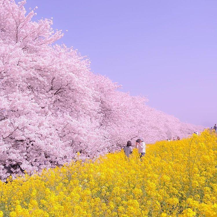 Spring Colours In Saitama Landscape Photography Landscape Scenery Instagram