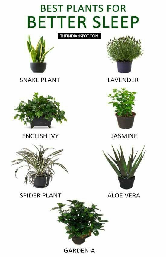 Best Plants To Keep In Your Bedroom To Help You Sleep.