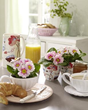 Primeln in der FrühstücksTasse Frühstück, Deko und Tassen