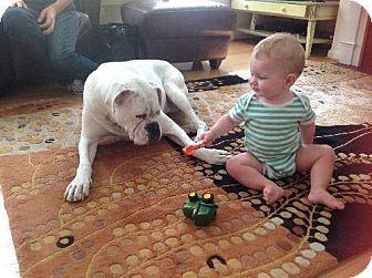 Pasadena Md Boxer Meet Brutus A Dog For Adoption Kitten