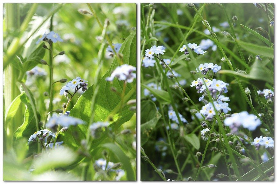 """""""Forget-me-not"""" auf Leinwand …."""