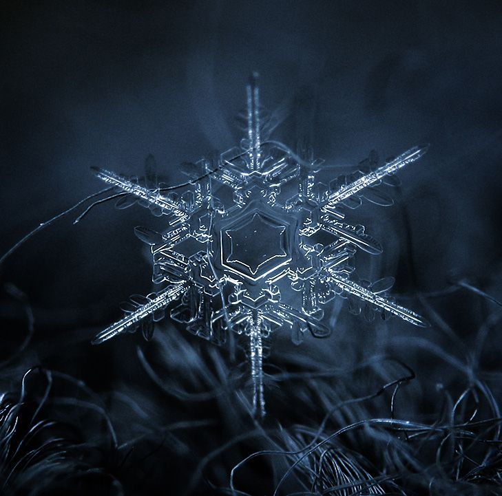Amazing Close Up Photos Of Snowflakes Will Give You Goosebumps Close Up Photos Photo Close Up