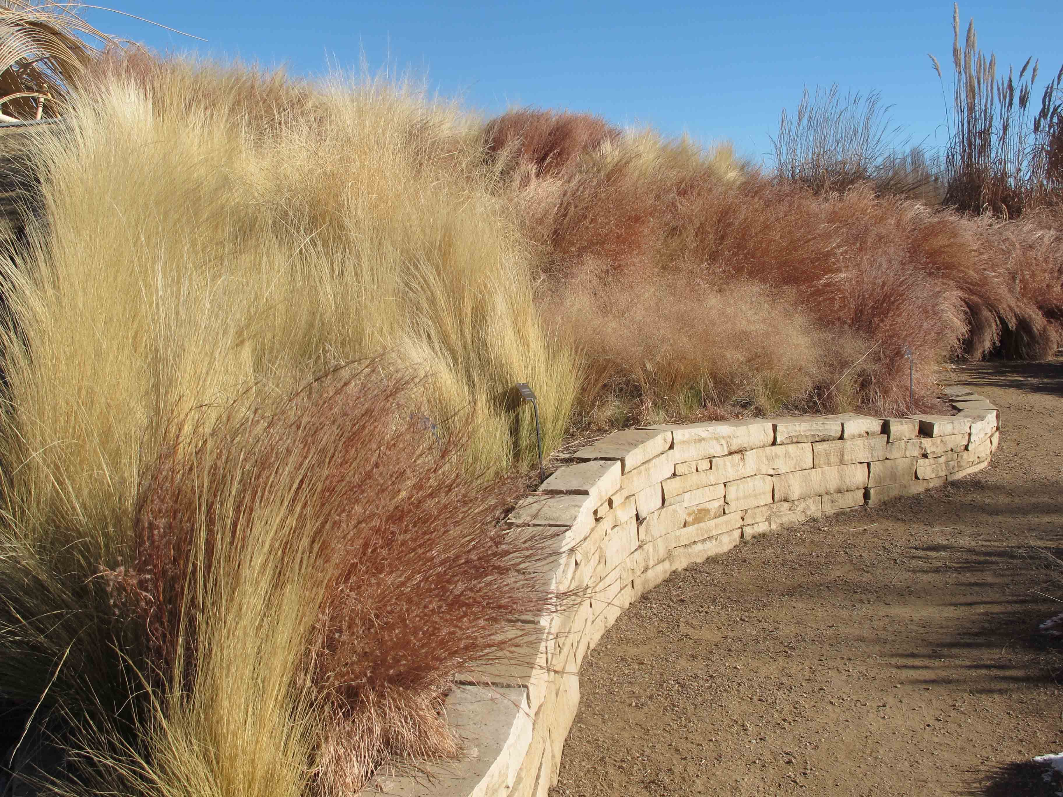 Garden Designers Roundtable: Winter Inspiration - Mixed Grasses in ...