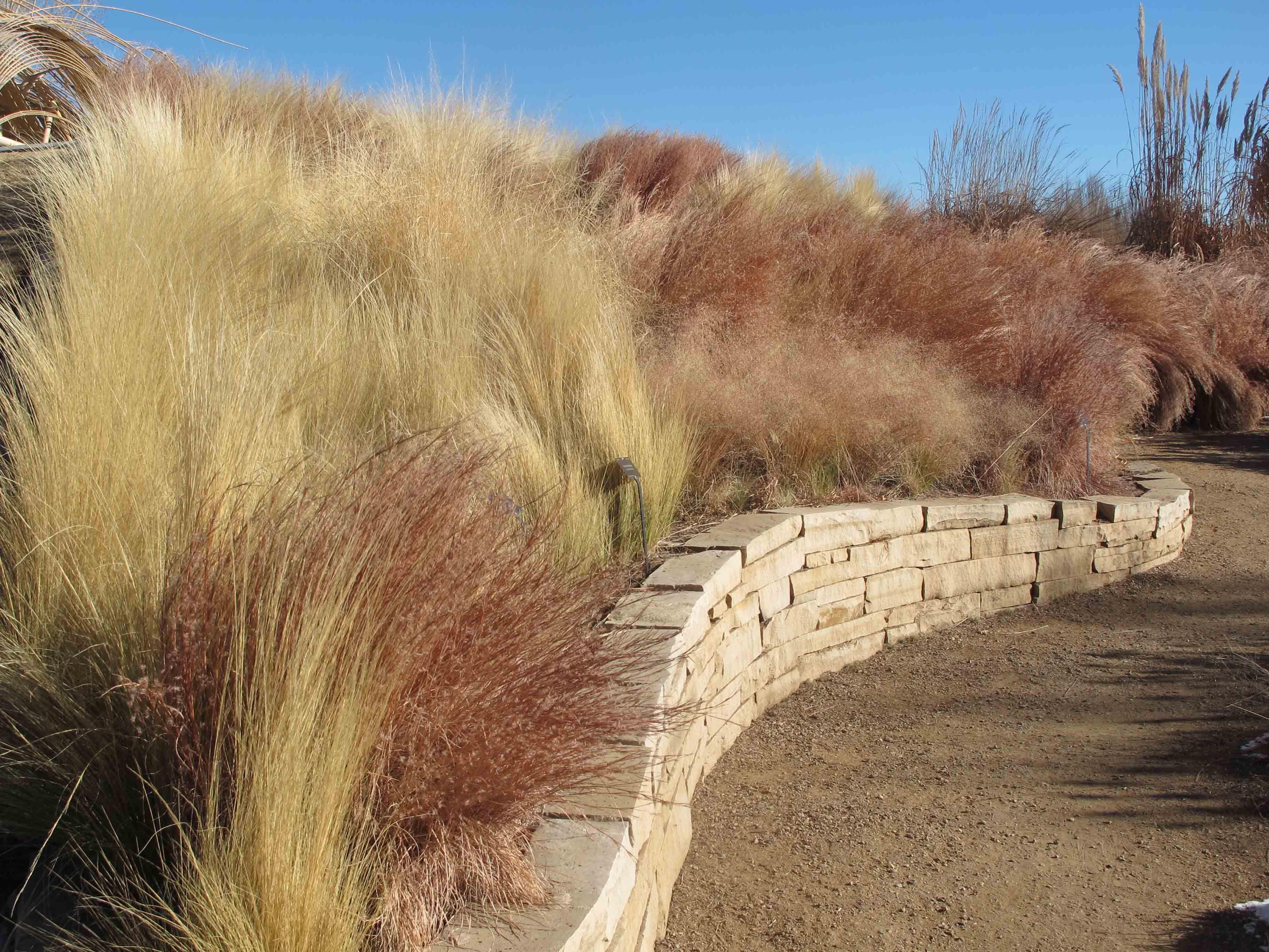 grasses in january at the denver botanical gardens winter garden