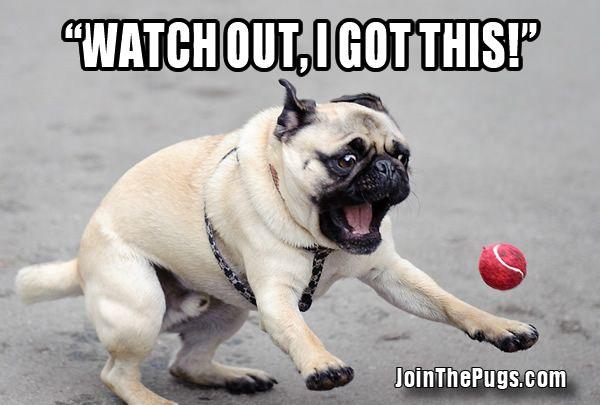Thank You Dailypuglet Blogspot Com Group Pugs Best Dog Breed