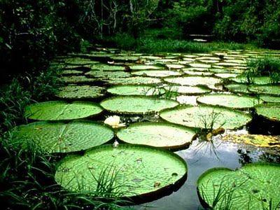 Empezar A Vivir Maravillas Naturales Parques Naturales Amazonas Colombia
