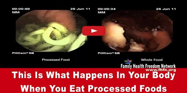 This Is What Happens In Your Body When You Eat Processed Foods | Family Health Freedom Network