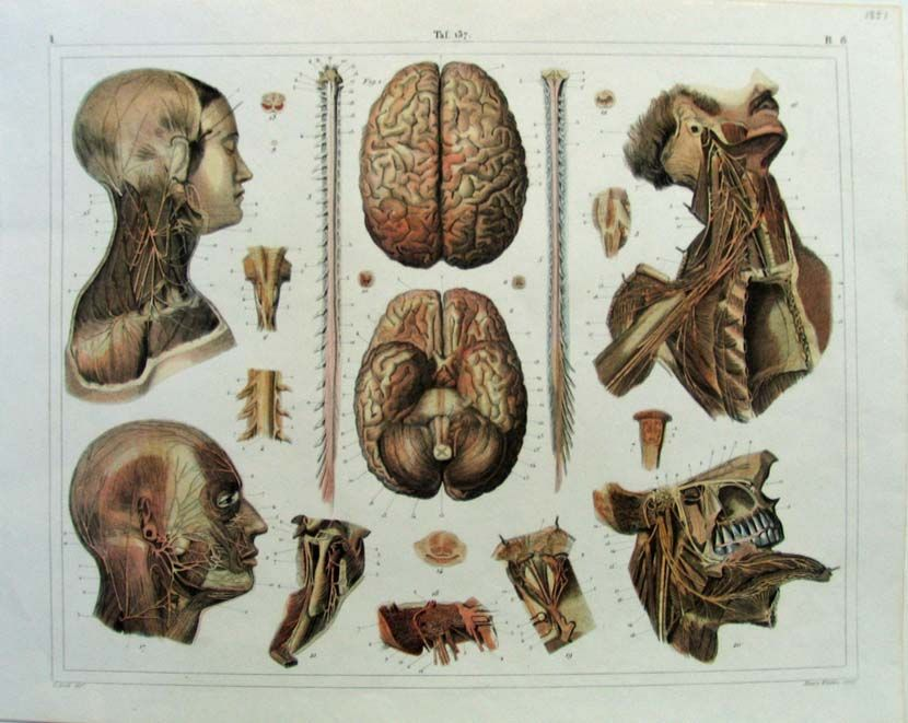1851 Diseases of Cerebro-Spinal Axis and of its Membranes from ...