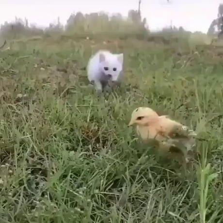Look out, a ferocious predator!