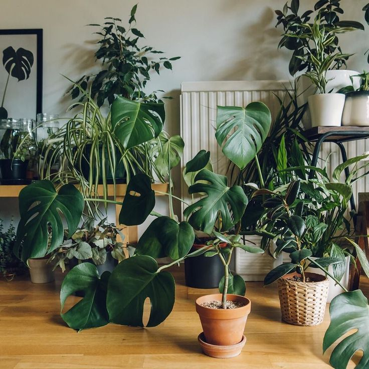 35 Indoor Garden Ideas To Green Your Home: Plants, Indoor Plants