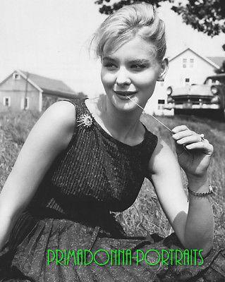 Retrato-de-la-muchacha-DIANE-MCBAIN-laboratorio-de-8-X-10-foto-anos-1960-B-W-sol-Sexy-Vestido