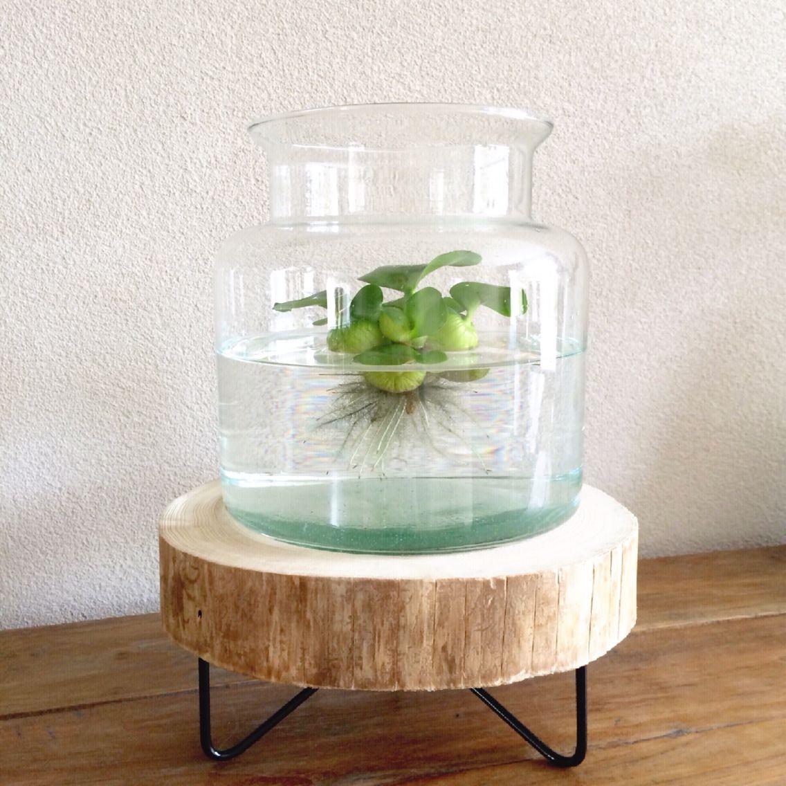 Photo of Waterplant