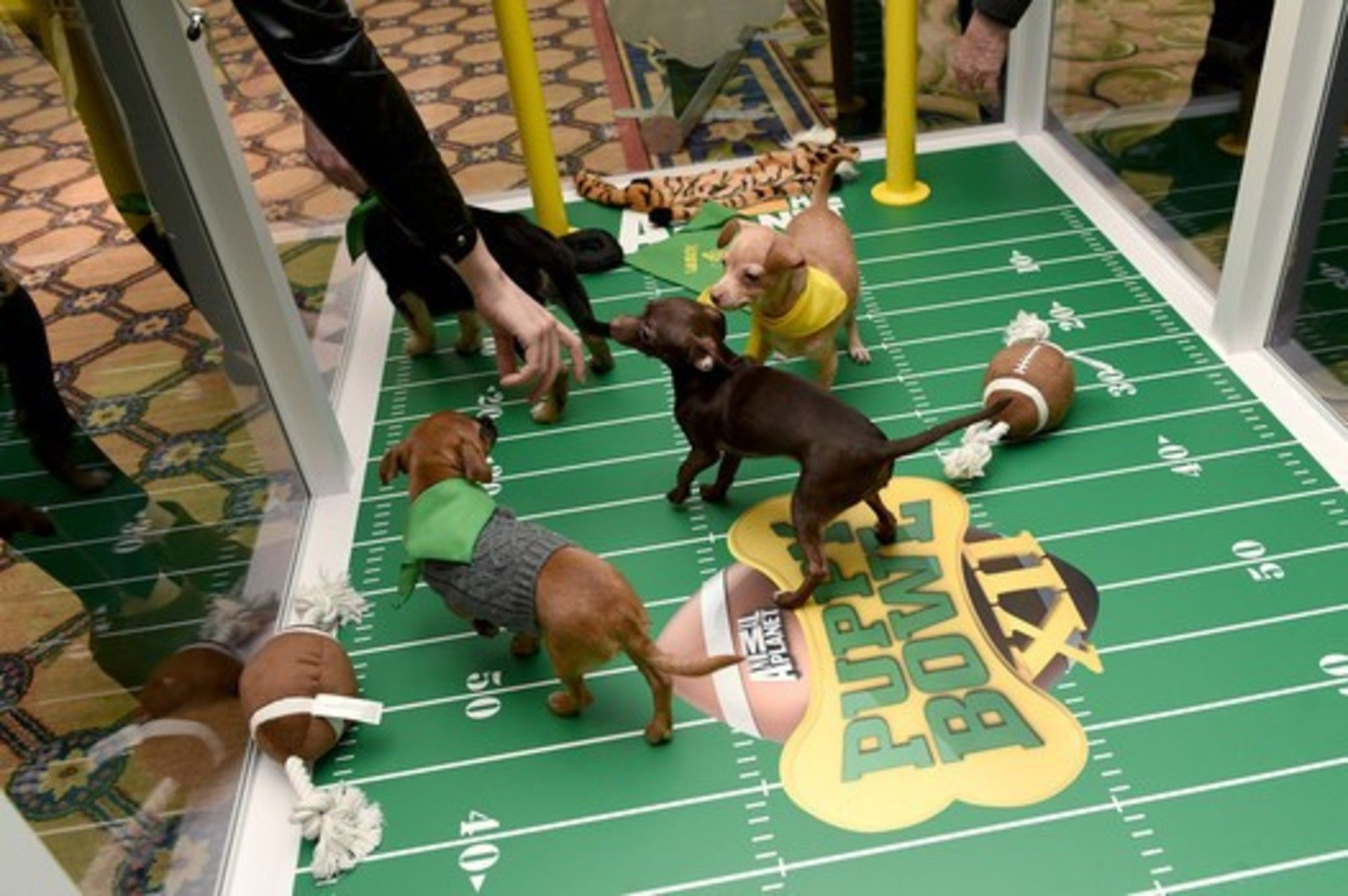 Families That Love Animals Can Help Puppy bowls