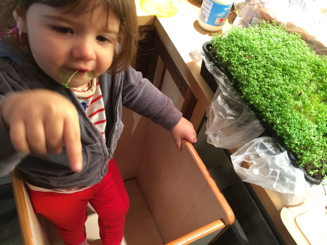 Lily's home grown cress