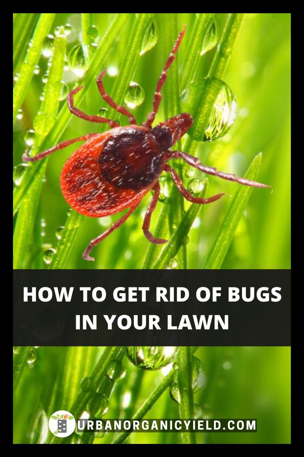 Get rid of lawn bugs pests and insects in 2020 garden