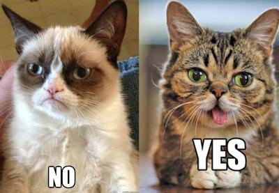 Grumpy Cat vs Lil Bub Grumpy cat, Bub the cat, Cats