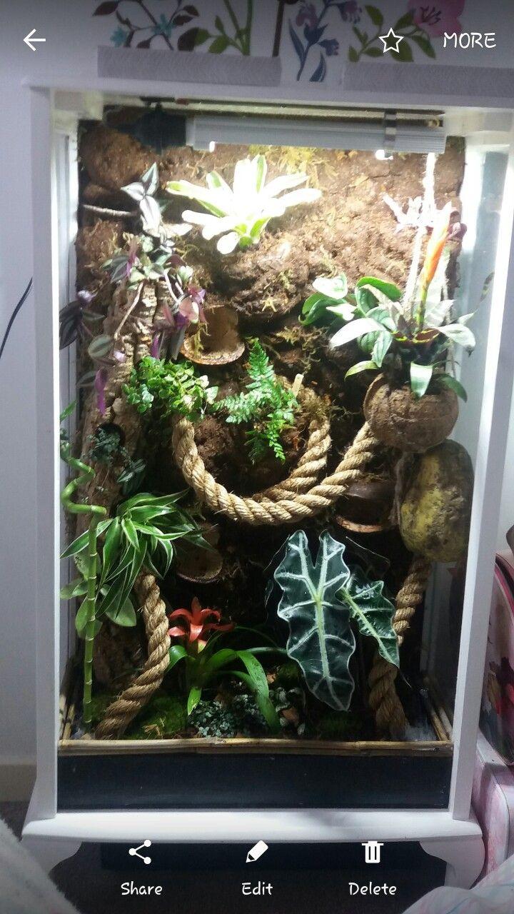 Crested gecko bioactive vivarium Reptile Enclosures Pinterest