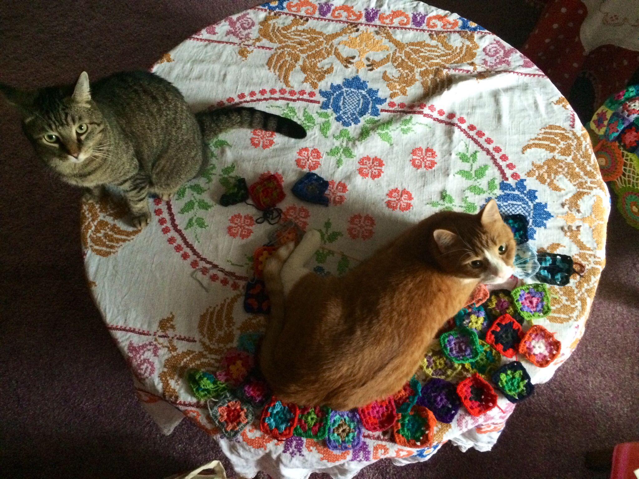 Kissat pöyällä ;)