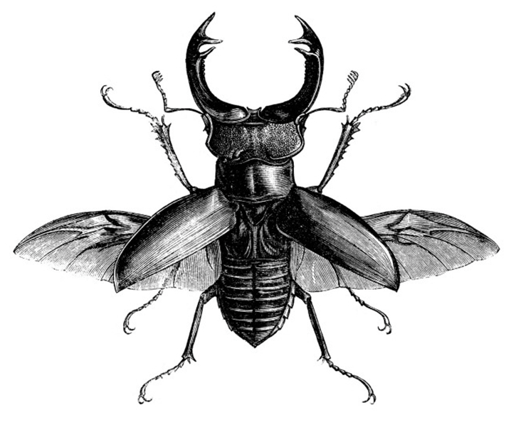 stag beetle kunst ide pinterest beetles tattoo and insects