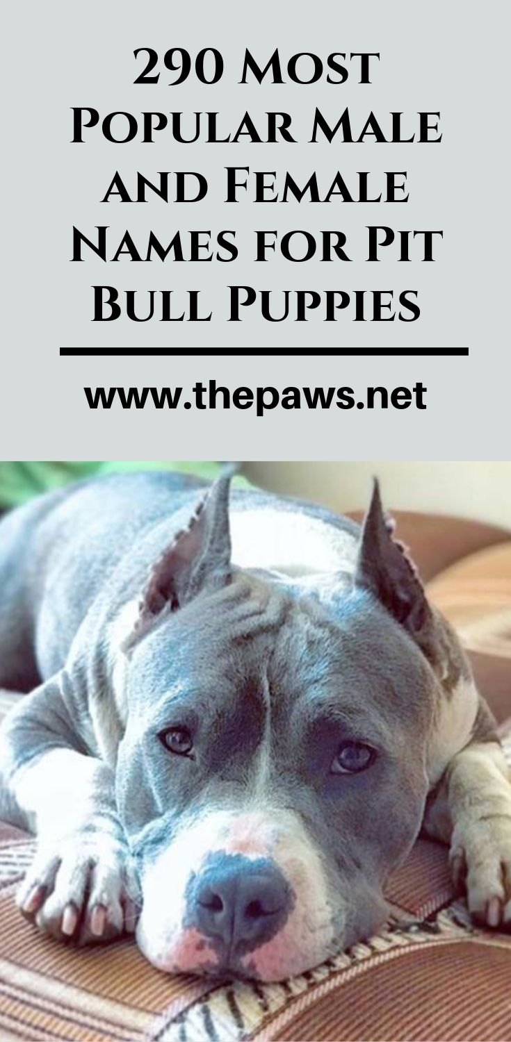 Pin On Pit Bull Terriers