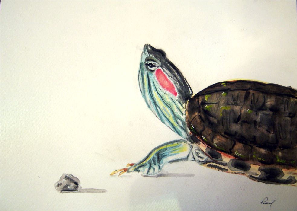 Red Ear Slider Original Watercolor Http Www Etsy Com Listing