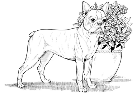 Dog Coloring Pages By Yuckles Dog Coloring Page Dog Coloring Book Horse Coloring Pages