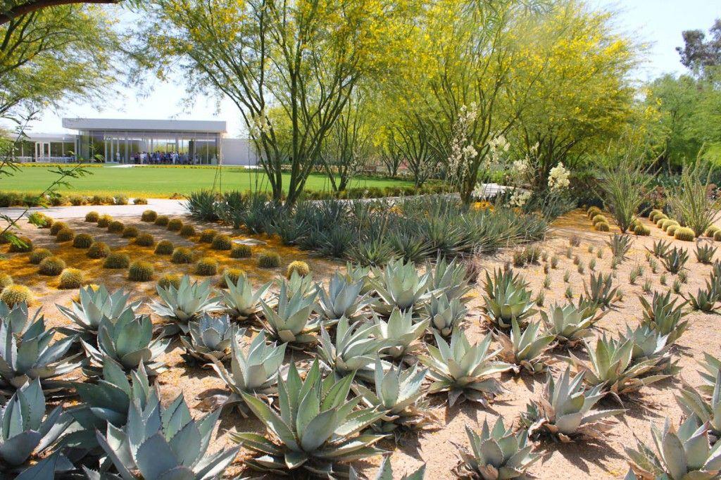 Barrel Cactus Modern Landscape Garden Cactus Garden