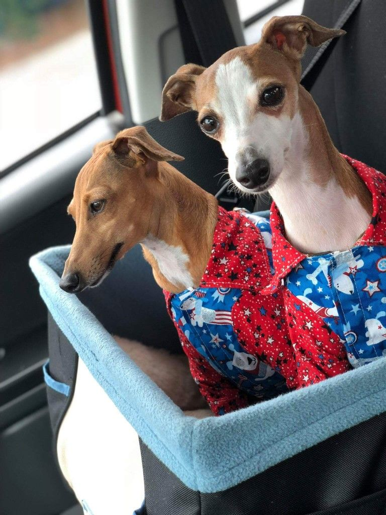 Summer And Moose Always Stylish Ready For A Ride Follow Them On