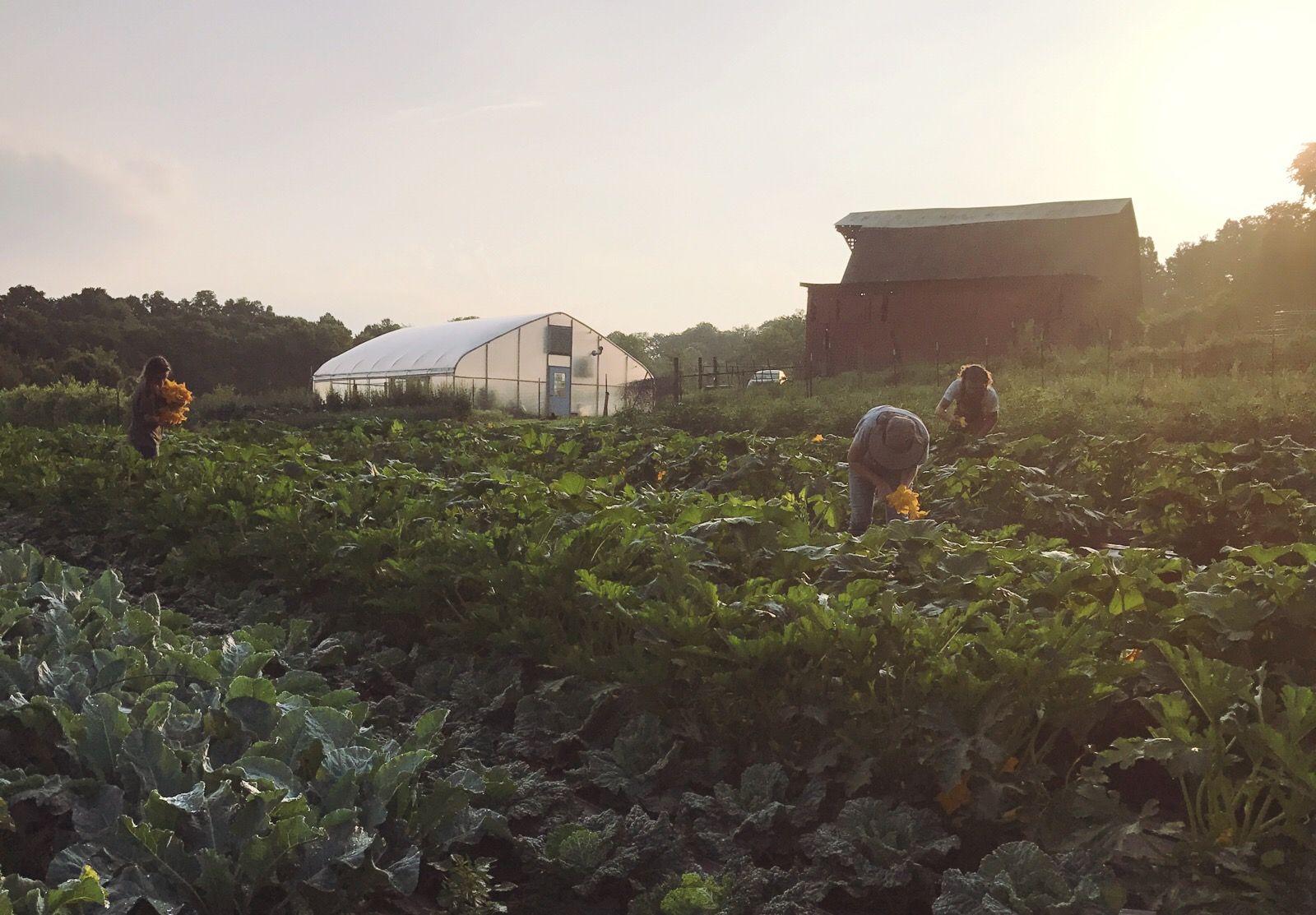 How to Build a Profitable Farm Business Farm business