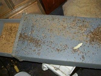 Bed Bug Infestation Bed Bugs Infestation Bed Bugs Bugs