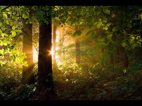 Morning in the Forest: 8 HOURS of Relaxing Nature Music - Meditation, Yo...