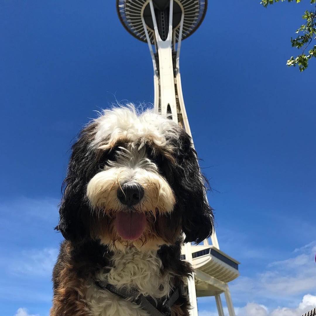 Best Of Seattle Spaceneedle Starbucks Puppucinos And