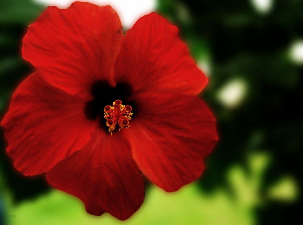Hibiscus Propagation How To Propagate Hibiscus Seed Starting