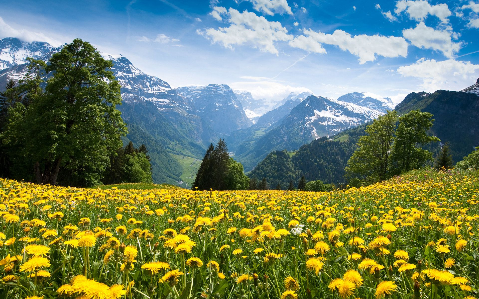 spring natural scenery hd - photo #8