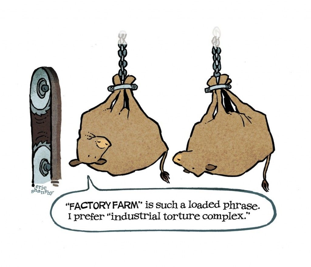 best images about factory farming human society
