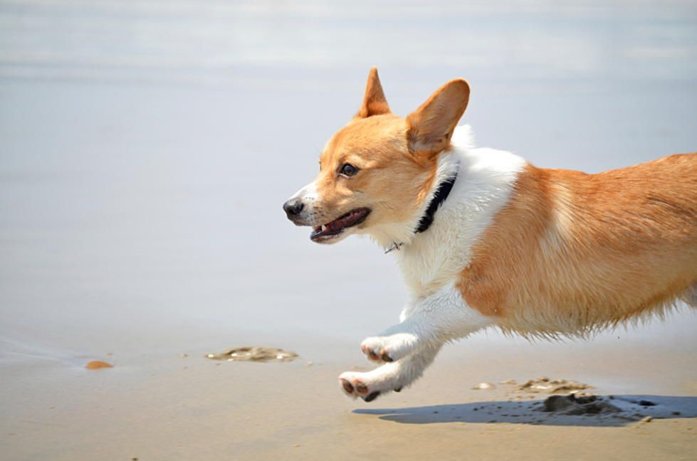 df30250fc Dog Friendly places to visit in south Jersey. Photo credit  Thinkstock