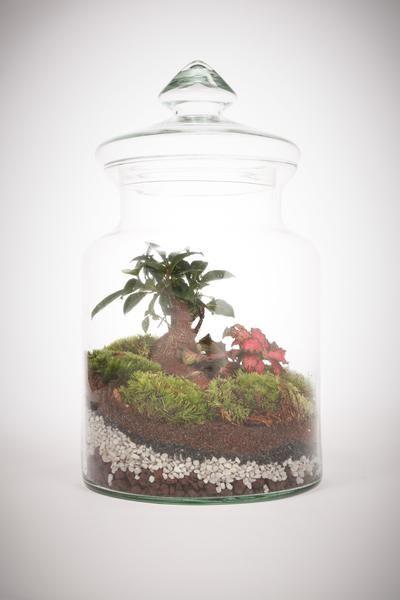 Prairie Médium Grand Ficus - Terrarium humide Green Factory - que faire en cas d humidite dans une maison