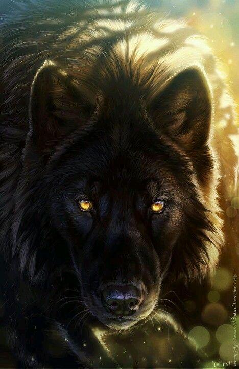 Hübsche Augen Wölfe