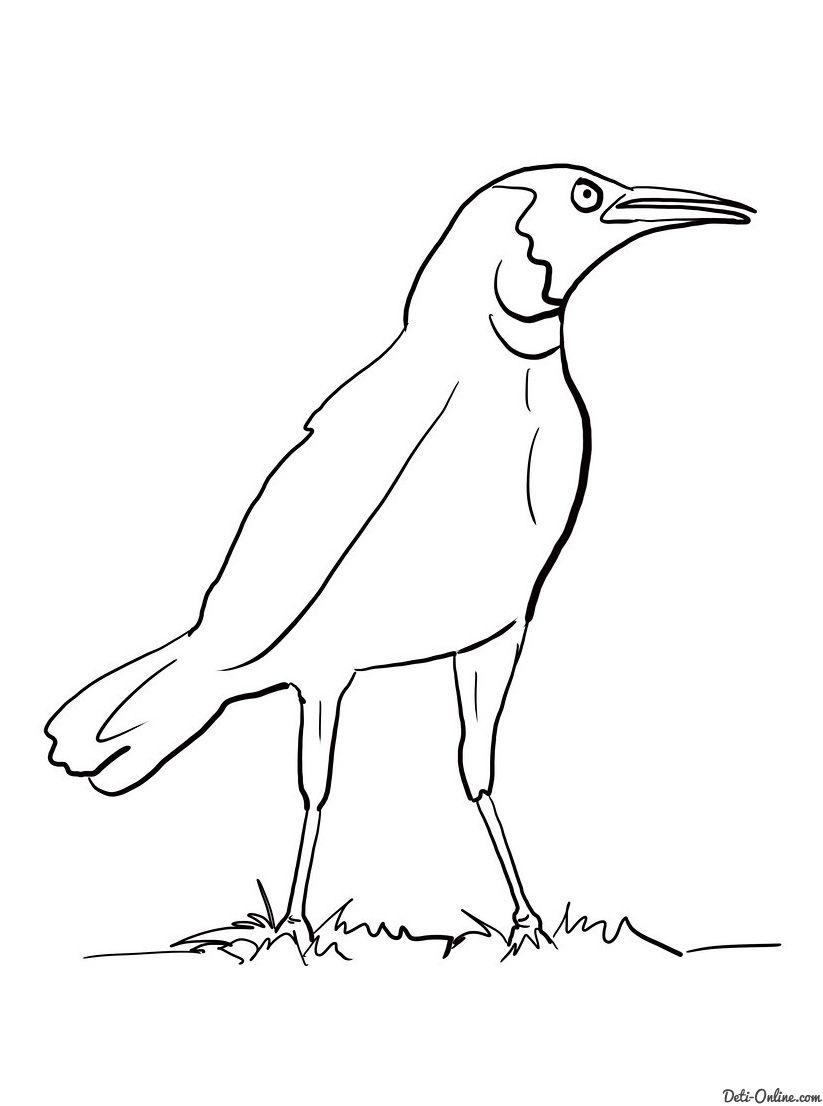 Raskraska Zlaya Vorona Raskraski Pticy Raskraski Voron Ptichki