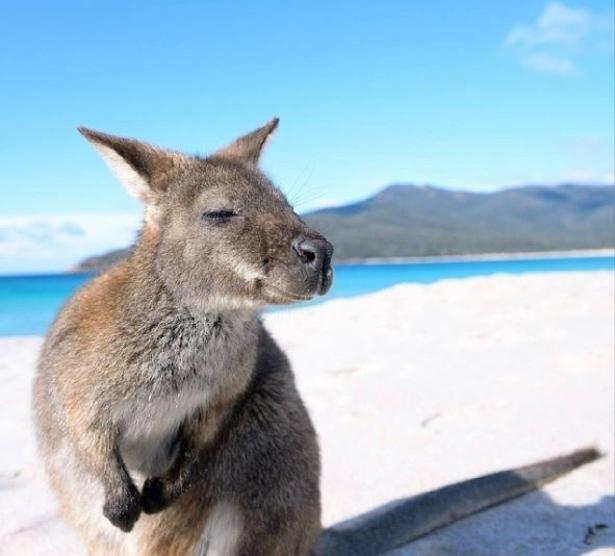 La Stampa - Australia, il fantastico mondo dei canguri
