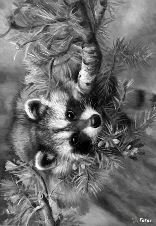 Pin By Melissa Lytle On Animal Coloring Pages Charcoal
