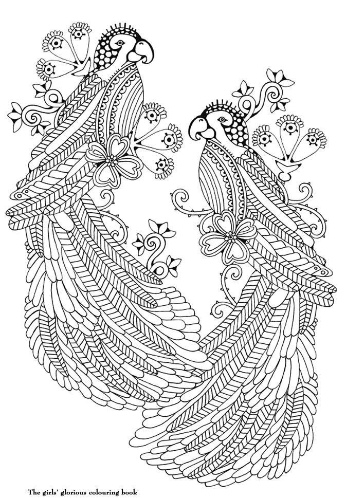 Two Birds From The Girls Glorious Colouring Book  Illustration