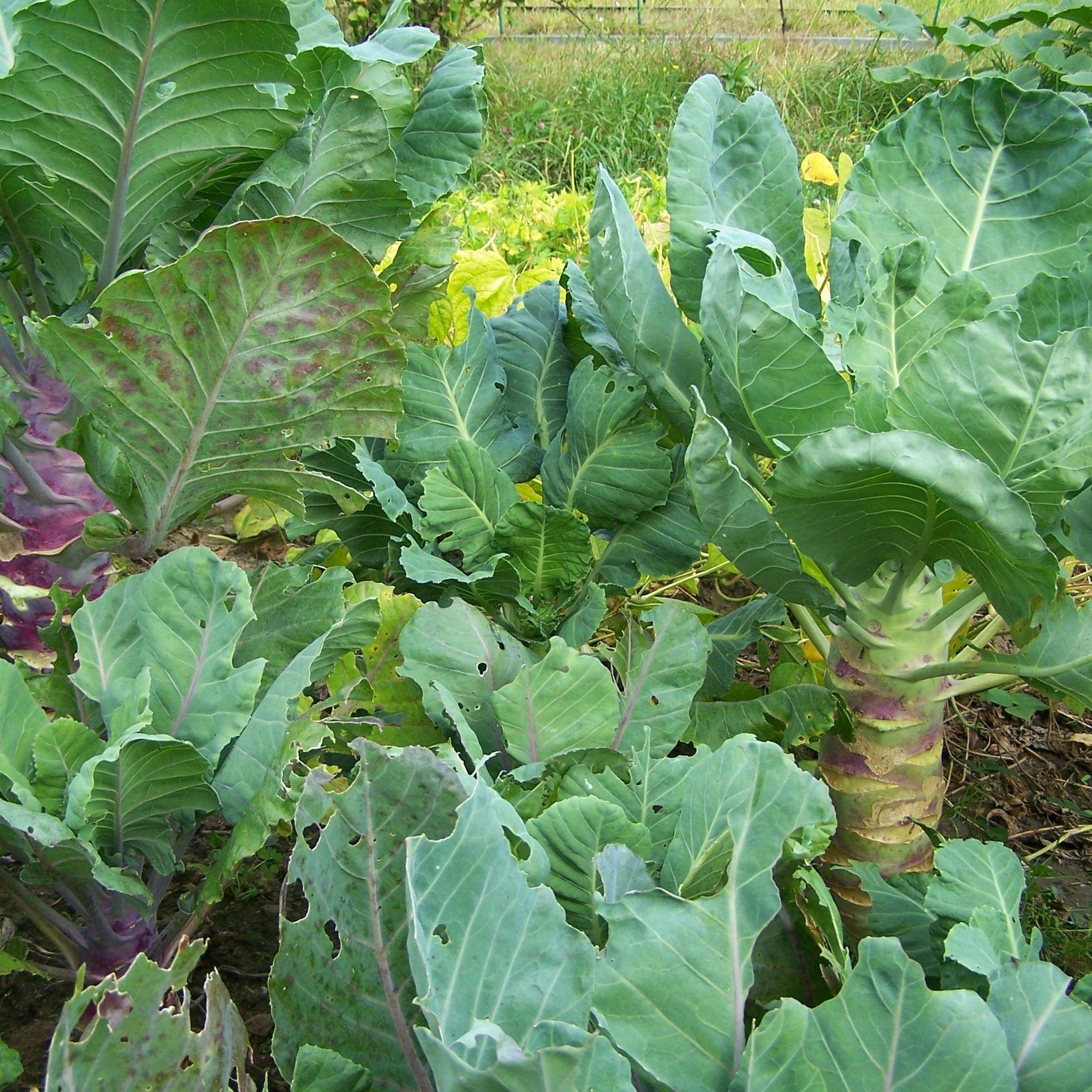 bio-saatgut.de | gedöns und pflanzen die ich im garten haben will