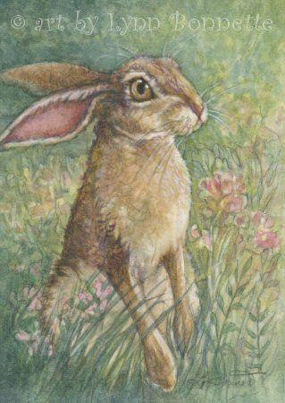 "Art by Lynn Bonnette: ""Jack Rabbit"""