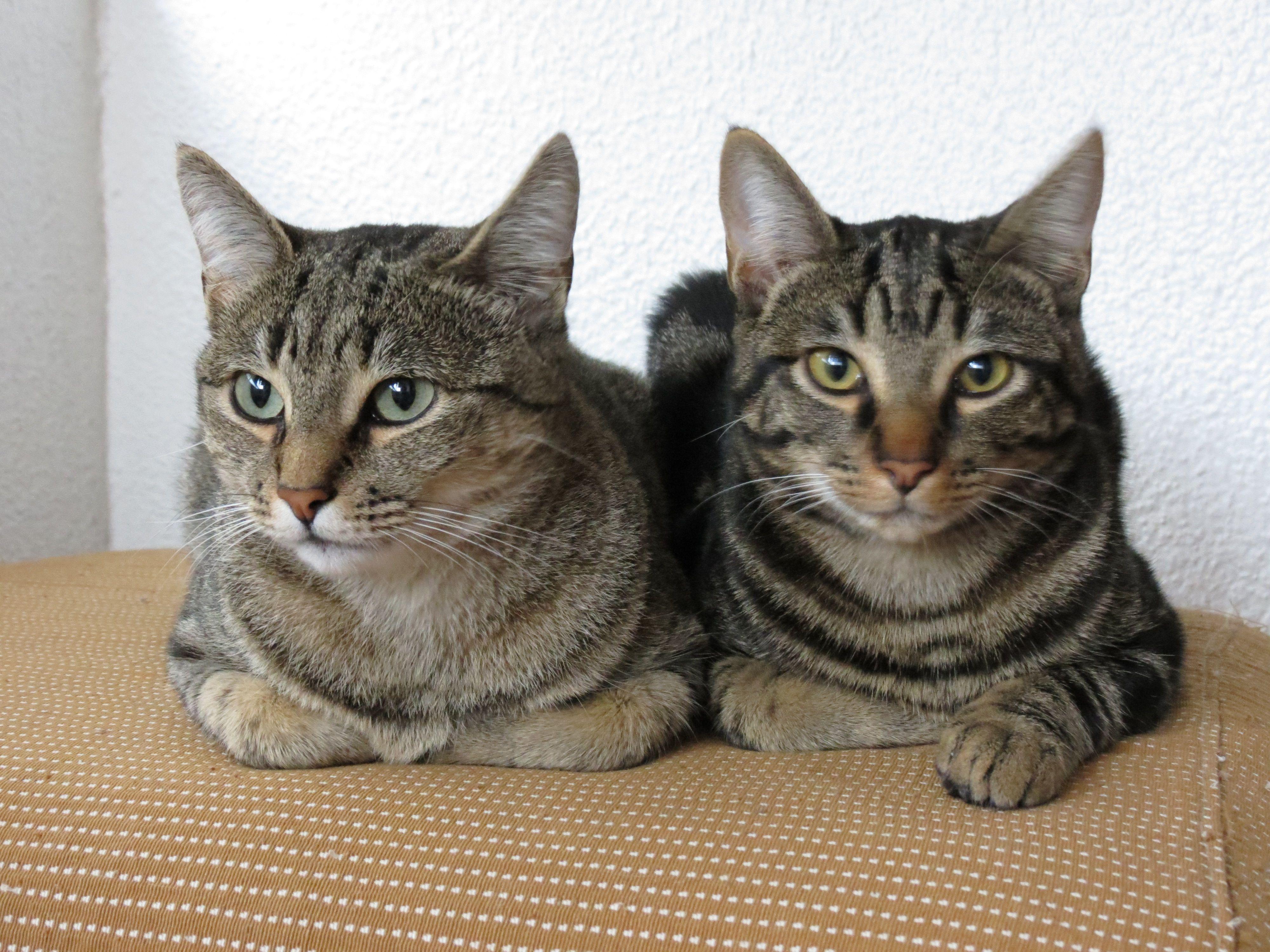 os meus queridos gatos  cleo e chita deitados no colchao.