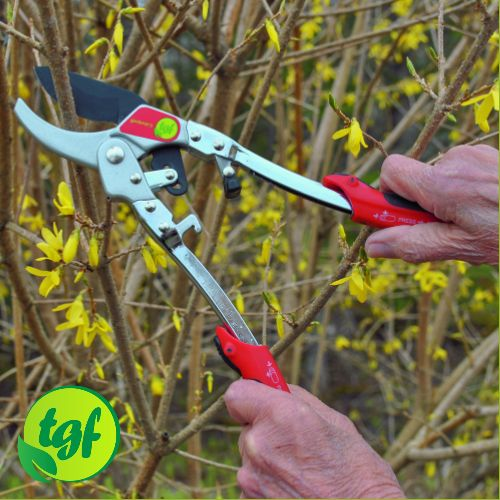 "After a number of months in preparation the Valspring Group is pleased to announce the launch of our second product in ""The Gardener's Friends"" line. TGF Mini-Loppers"