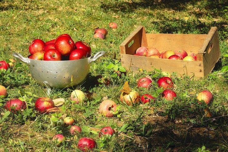 Pain perdu aux pommes de Christophe Adam