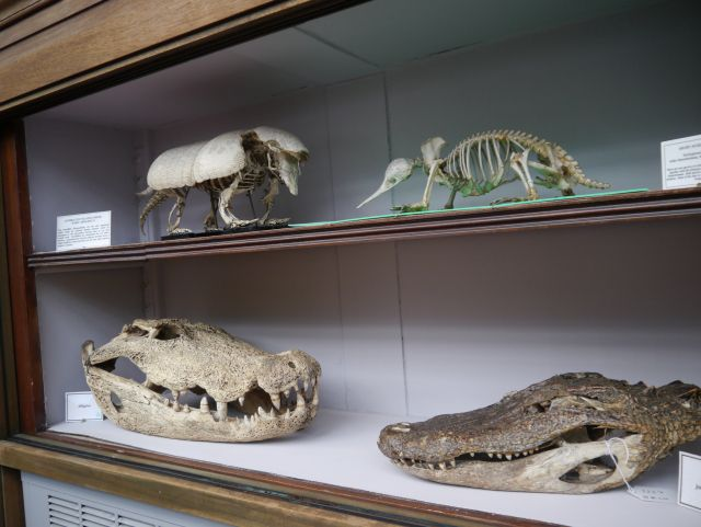 University of Edinburgh Anatomy Museum and Lecture Theatre Doors Open Days (c) Gillian McDonald
