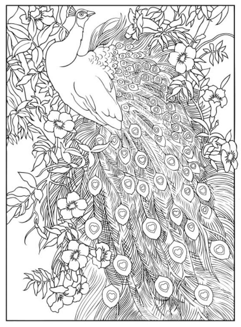 Bird Feather | Coloring pages, Cool coloring pages, Pattern ... | 1041x766
