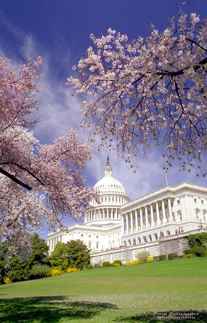 The Us Capitol Building In Cherry Blossoms Washington Dc Travel Capitol Building Washington Beaches